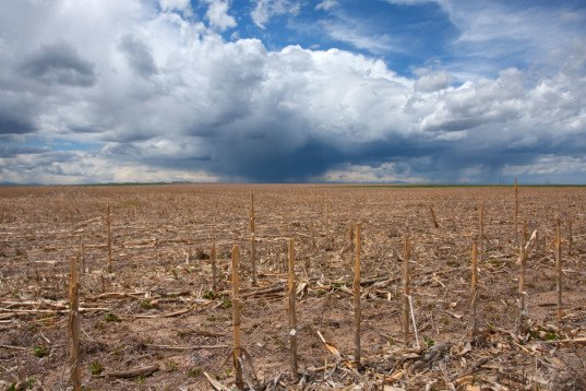 food shock, food security, food scarcity, water scarcity, food riot, agriculture climate change, global warming farming