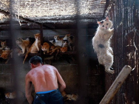 yulin, dog meat festival, dog meat, animal cruelty, china dog, meat trade, yulin china, humane society international, cat meat