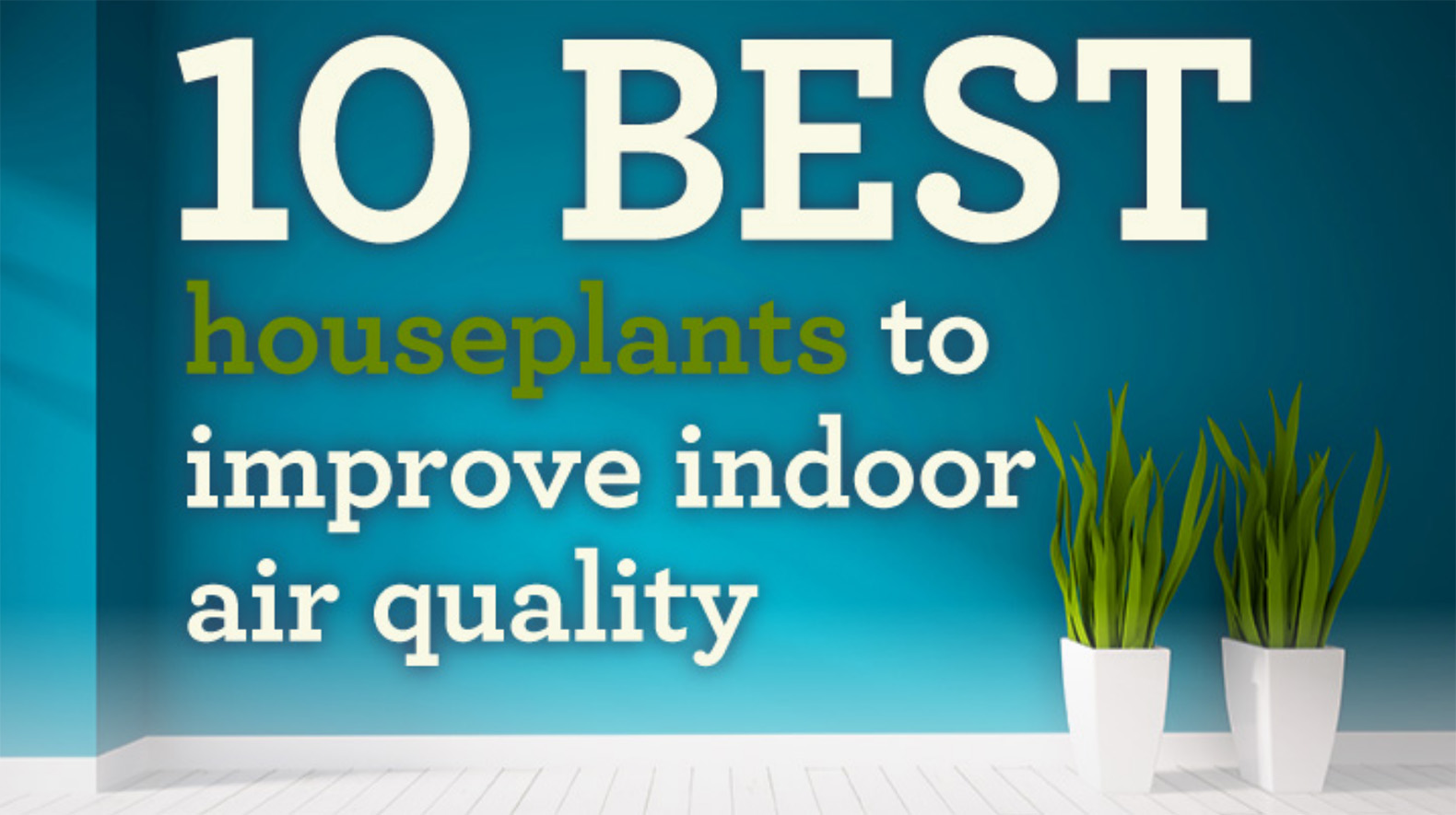 INFOGRAPHIC: These pollution-busting houseplants will have you breathing easier