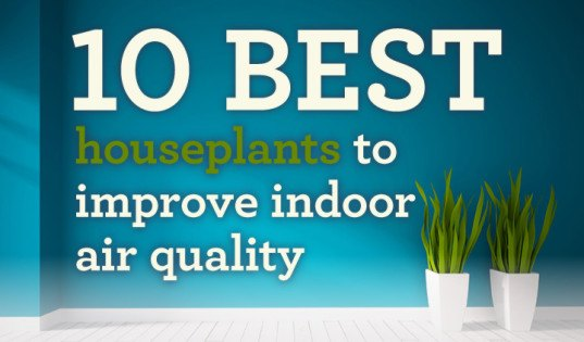 INFOGRAPHIC: These pollution-busting houseplants will have you ... on