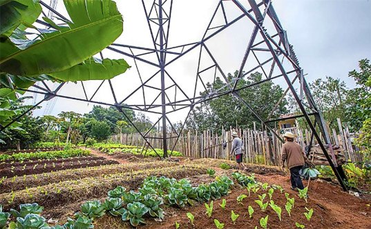urban farming, Brazil, São Paulo, vacant lots, NGO, Cities Without Hunger, greenhouses, school gardens, local food, urban gardening, slums, NGO, Cities without Hunger, overpopulation, food scarcity,