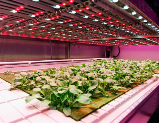 Phillips, urban farming, indoor farming, LED, LED for farming, Eindhoven, The Netherlands, Phillips GrowWise Research Center, light recipes, LED light recipes for food, indoor farming, city farming, urban farming, sustainable food