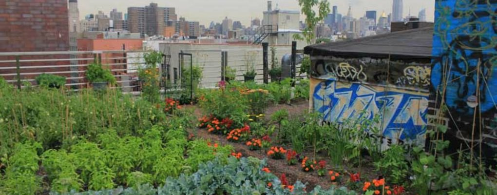 Former Les Squat Installs Beautiful And Bountiful Green Rooftop Garden