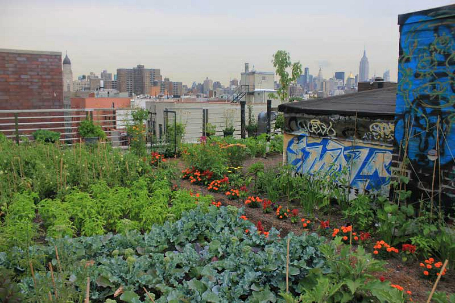 Plants for rooftop gardens - Beautiful And Bountiful Rooftop Garden Grows Atop Former Les Squat