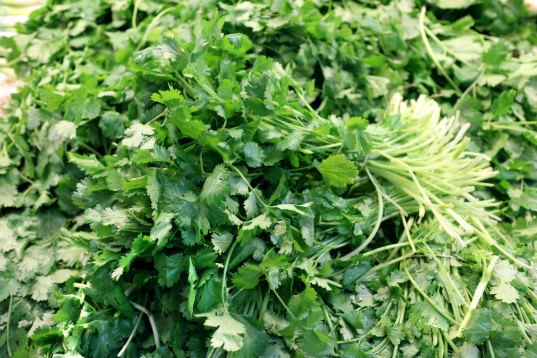 cilantro, agriculture, import ban, food poisoning, parasitic illness, centers for disease control, puebla mexico, mexican cilantro, food and drug administration, cilantro imports, farming conditions, farming sanitation