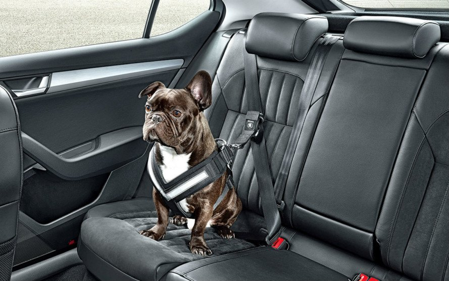 Skoda Unveils A Seatbelt To Keep Your Dog Safe On The Road