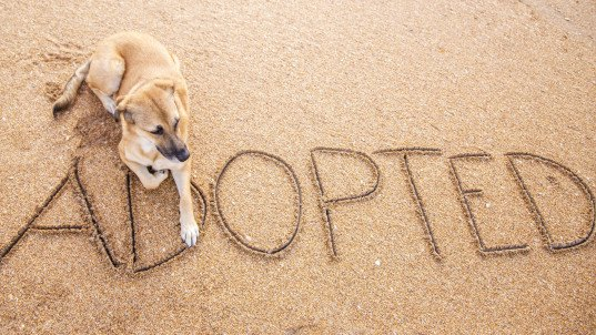 arizona pet stores, puppy mills, rescue animals, arizona rescue animals, ban on puppy mills