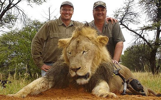 Cecil, Cecil the lion, Cecil killed, poaching, lion poaching, illegal poaching, Walter Palmer, Jericho, Jericho the lion, Cecil's brother killed, Cecil Jericho, Jericho killed