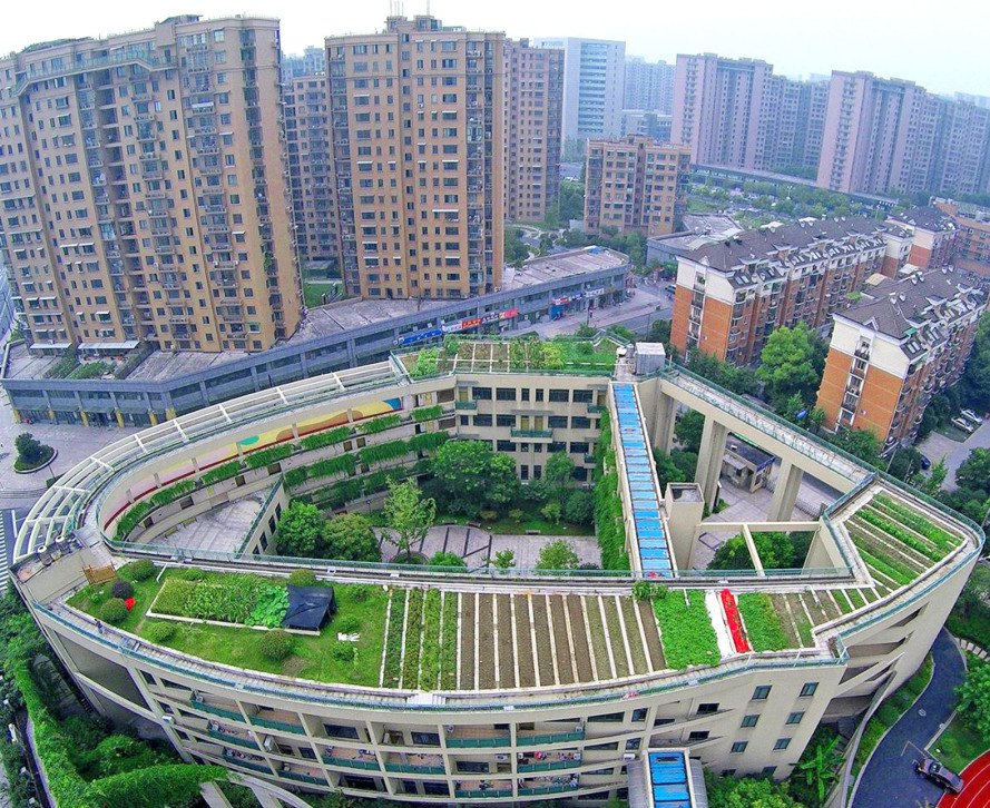 Organic rooftop farm grows atop an elementary school in China