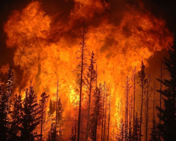 fires, wildfires, forest fires, government, funding, fire fighters, environment, climate change, forests, National Forest Service, drought, water shortage