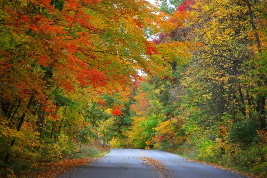 noaa fall foliage, fall foliage map, predicting autumn leaves, predicting foliage change, autumn road trip planning, fall road trips, fall sight seeing, autumn nature, interactive fall foliage tool
