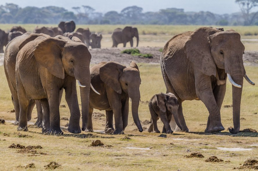 Stealth GPS in fake elephant tusks maps illegal smuggling routes
