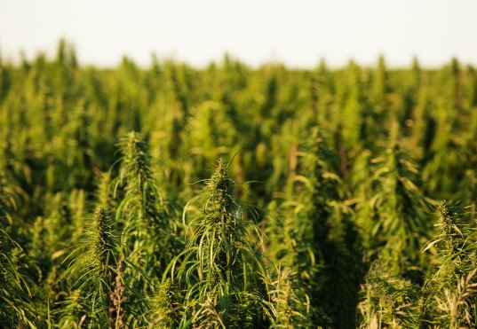 eco-hemp, hemp building, eco building materials, green building materials, plant-based construction materials, nick voase, east yorkshire, uk farmer grows house, grow your own house