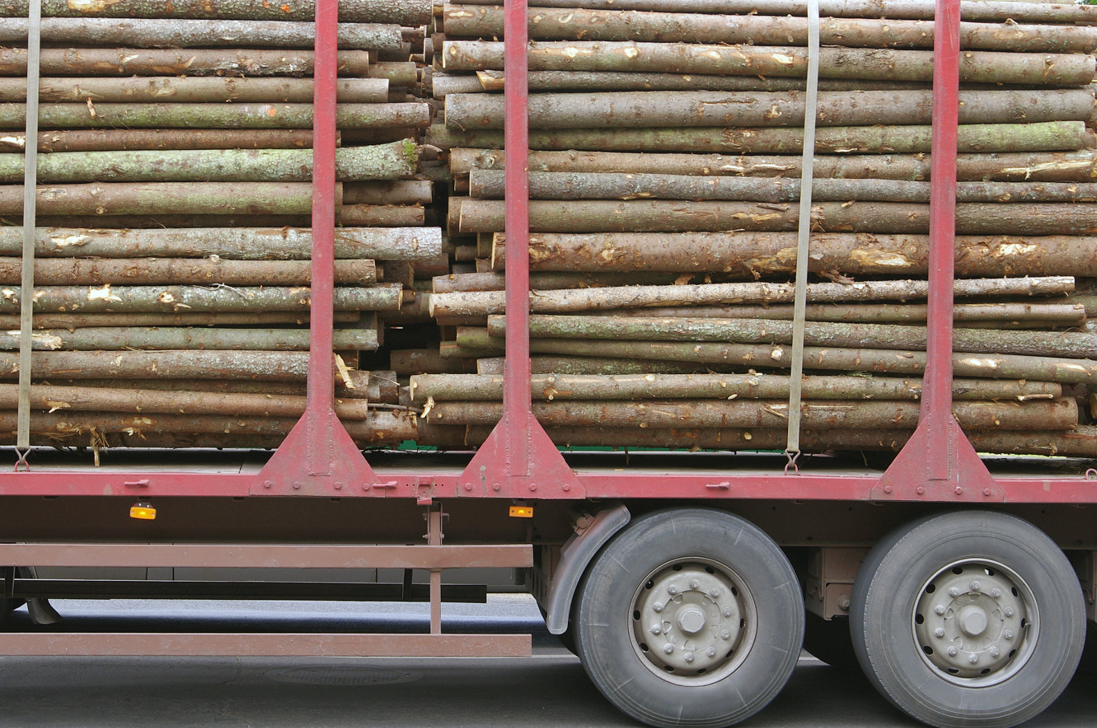 The UK is building the world's largest biomass plant - and