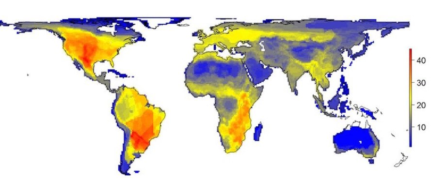 New map shows where large mammals would exist without humans
