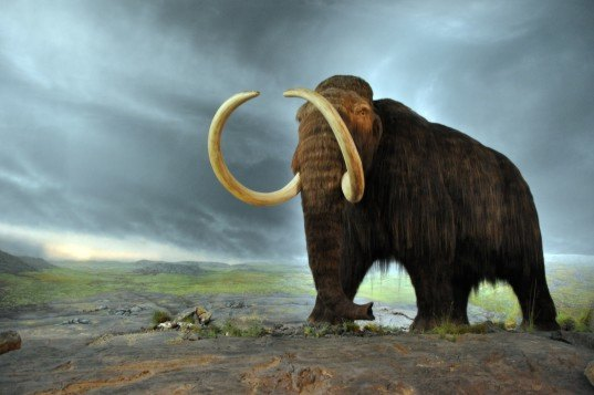 wildlife, scientific research, wildlife study, environmental destruction, human effect on environment, animal conservation, data visualization, evolution, wooly mammoth, sabre tooth tiger, large mammals, extinction