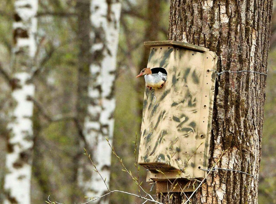 Chevy Volt Battery Covers Recycled As Adorable Nesting Bo For Endangered Birds