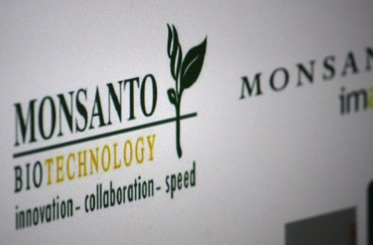 Monsanto may be to blame for soaring suicide rates among farmers in India