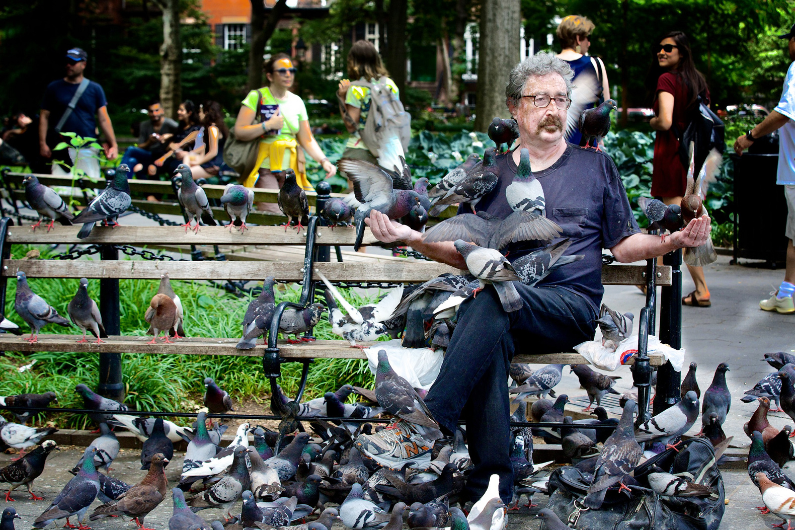 Mass pigeon kidnapping leaves Washington Square Park locals mourning feathered friends