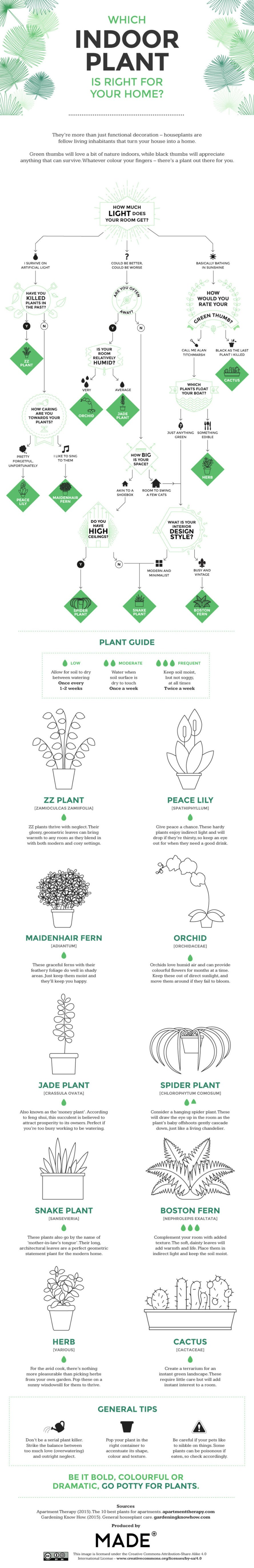 indoor plants, house plants, plant purifiers, air purifiers, houseplants, cleaning the air, speeding healing, infographic, neomam, moade.com, gardening