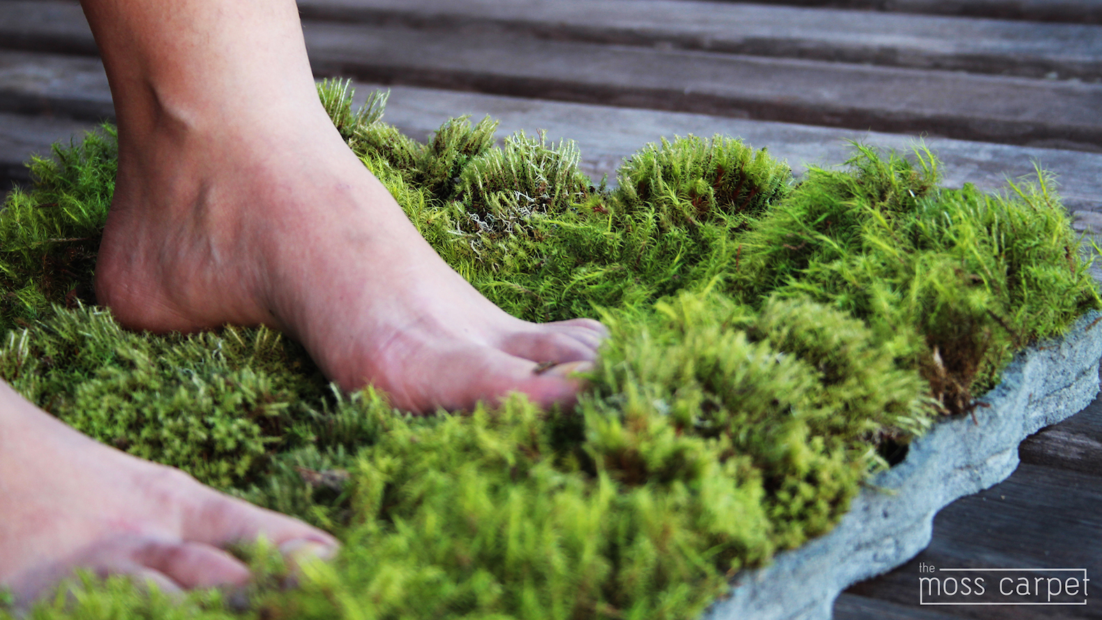 Good The Mini Moss Carpet Is On Kickstarter U2013 Help Make It A Reality