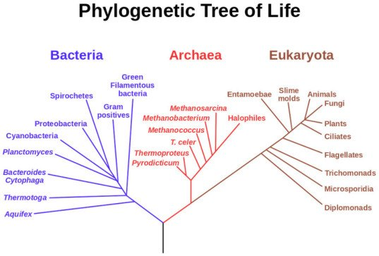 tree of life, genetic mapping, The Open Tree Taxonomy, Karen Cranston, duke university, map of all life on earth, genetic mapping of known species, digital mapping of genes, digital mapping of evolution