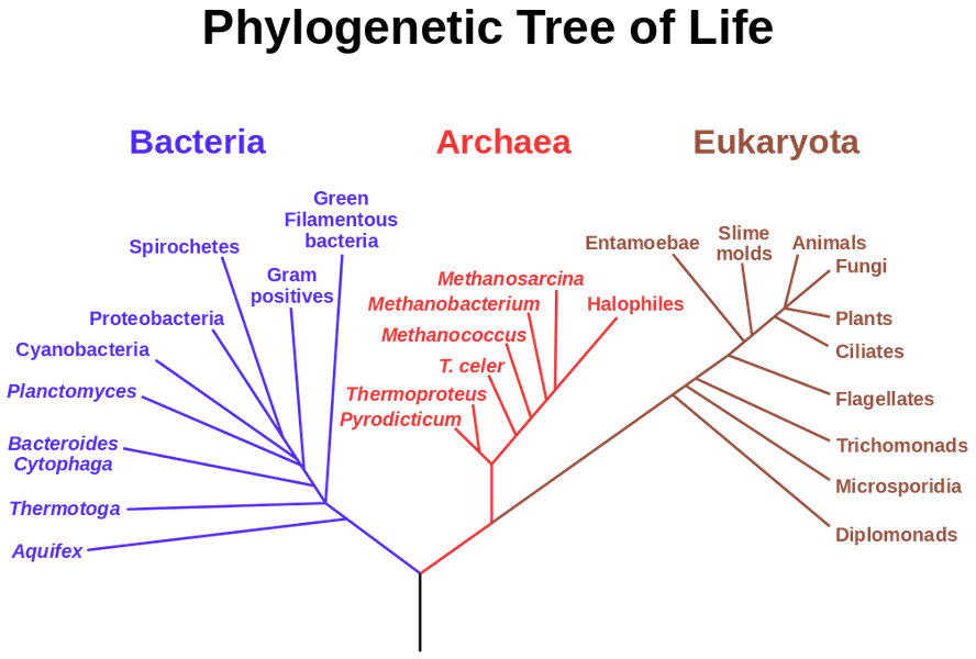 Phylogenetic tree of life inhabitat green design innovation phylogenetic tree of life inhabitat green design innovation architecture green building ccuart Image collections