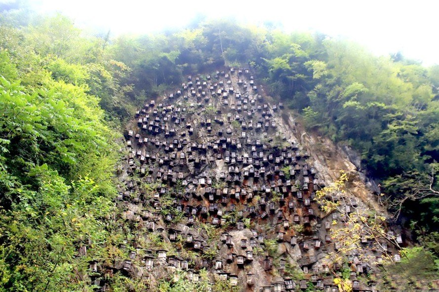 Hundreds of beehives hang off a steep cliff in China to save