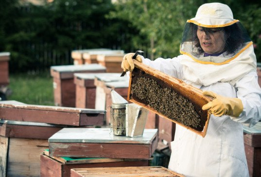 bees, honey bees, probiotics for honeybees, Pro-bee-iotics, probiotics protect honeybees from neonicotinoids, protecting bees from pesticides, how to protect honeybees from pesticides, University of British Columbia, colony collapse disorder, honey bee crisis, honey bee protection, bee research, probiotic solutions for bees