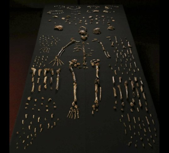 ancient humans, ancient man, hominid, hominins, homo naledi, south africa, human fossils, paleontology discoveries, new evidence of ancient humans, new discovery of human fossils, largest human fossil find in africa