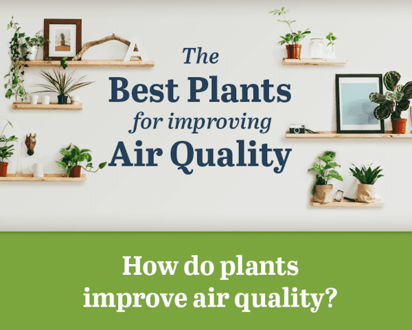 benzene, infographic, reader submitted content, volatile organic compounds, VOCs, ProFlowers, indoor toxins, toxins, NASA, air quality, plants improve air quality, plants remove toxins