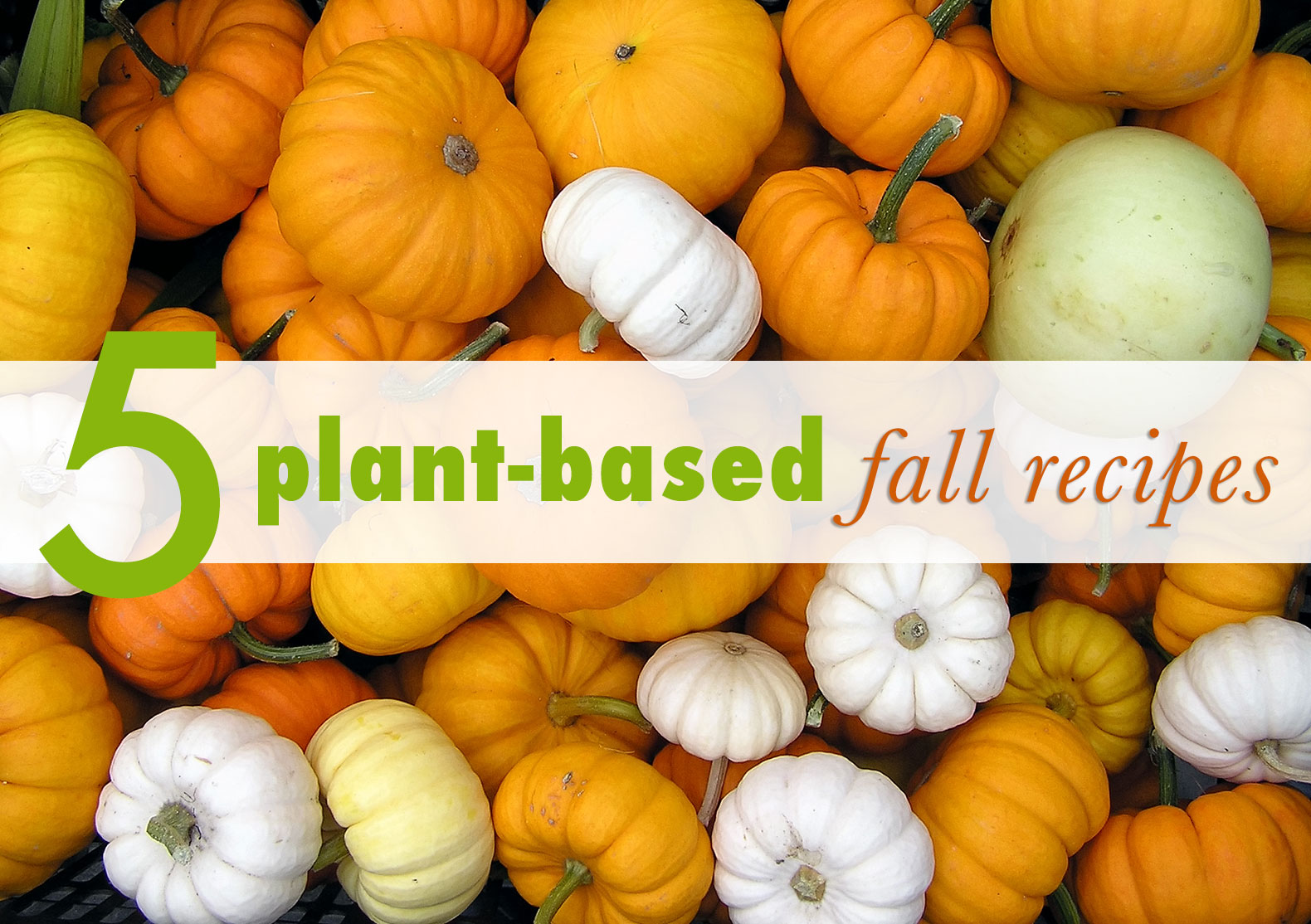 5 Mouthwatering plant-based fall recipes