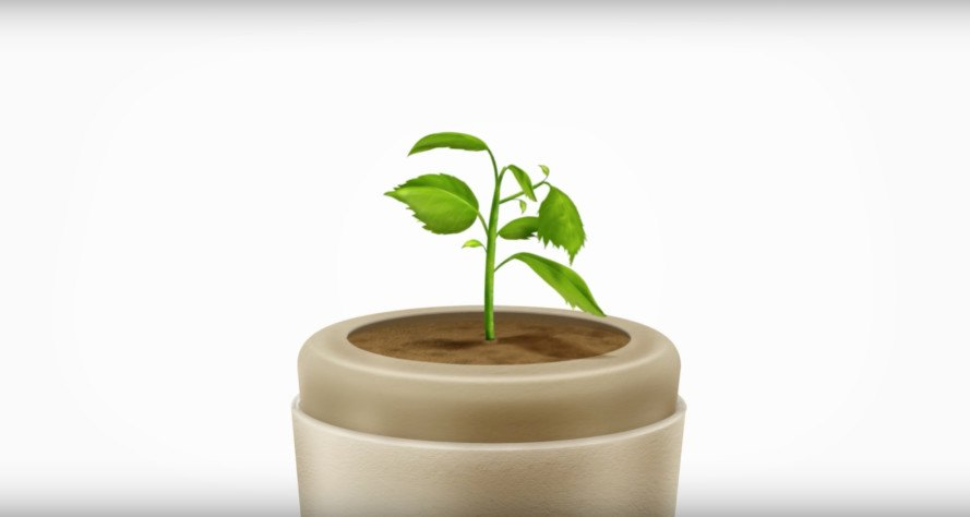 bios urns, bios biodegradable urns, cremains tree, cremated remains tree, urn sprouting a tree, tree from human remains