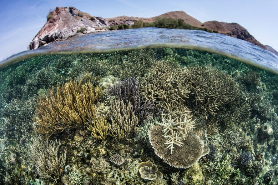 coral reefs, coral bleaching, sunscreen effects on coral reefs, oxybenzone coral reefs, oxybenzone harmful, sunscreen harmful to coral reefs, environmentally responsible sunscreen