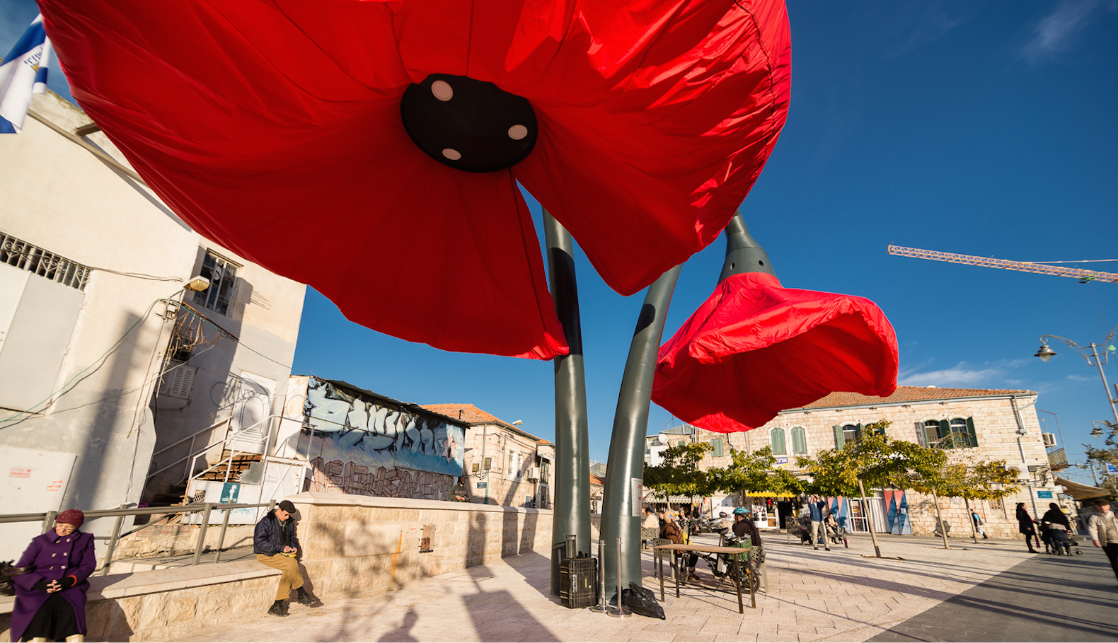 Jerusalems Giant Red Poppies Bloom When You Walk By Inhabitat