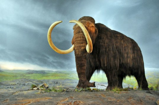 detroit woolly mammoth, michigan woolly mammoth, Lima county woolly mammoth bones, ancient mammals, archaeological finds, university of michigan, most complete woolly mammoth skeleton,