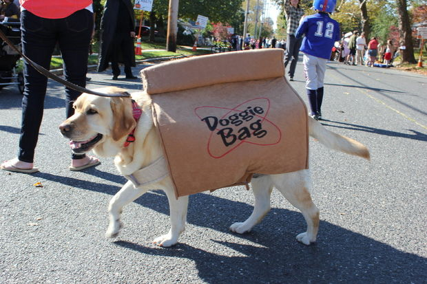 10 adorable diy halloween costumes for pets inhabitat green halloween halloween costumes halloween pet costumes pet costumes dress up pet halloween solutioingenieria Image collections