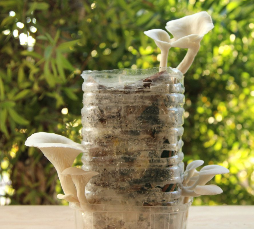 HOW TO: Grow your own mushrooms from recycled cardboard and