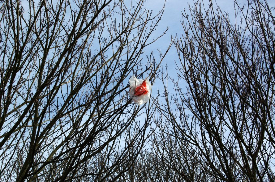 plastic bags, plastic bag image, plastic bag ban, plastic bag in a tree
