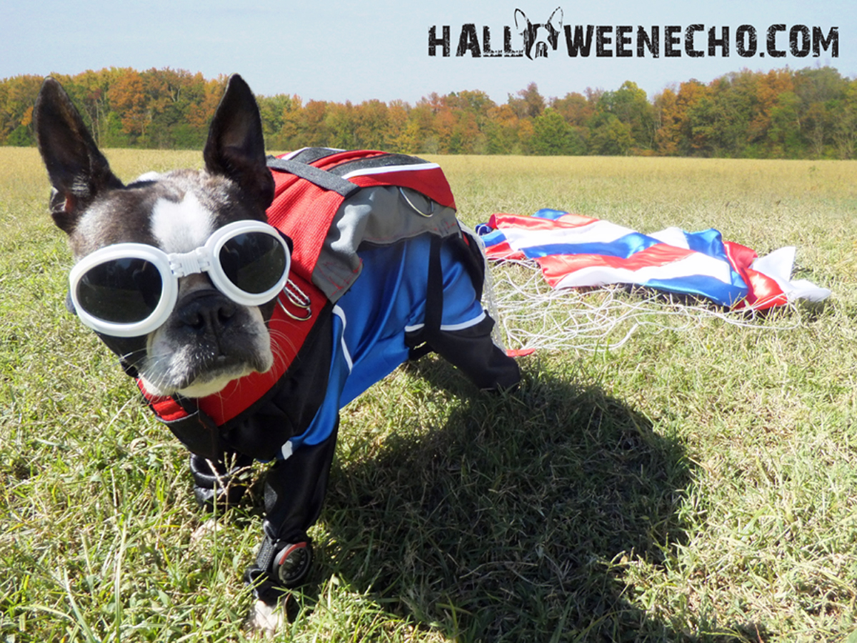10 Adorable Diy Halloween Costumes For Pets
