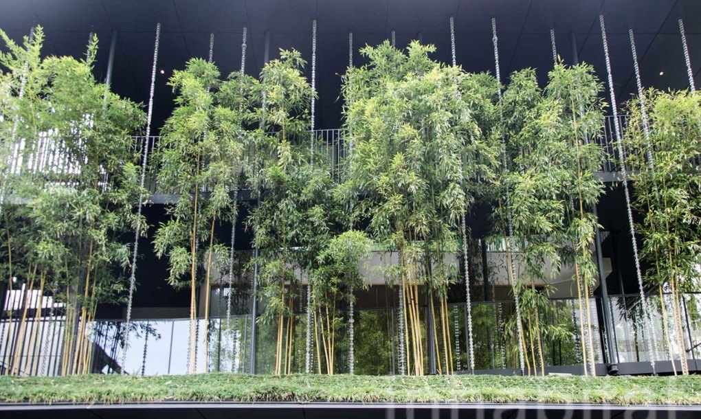 A Lush Bamboo Forest Thrives Atop The Ekouin Buddhist