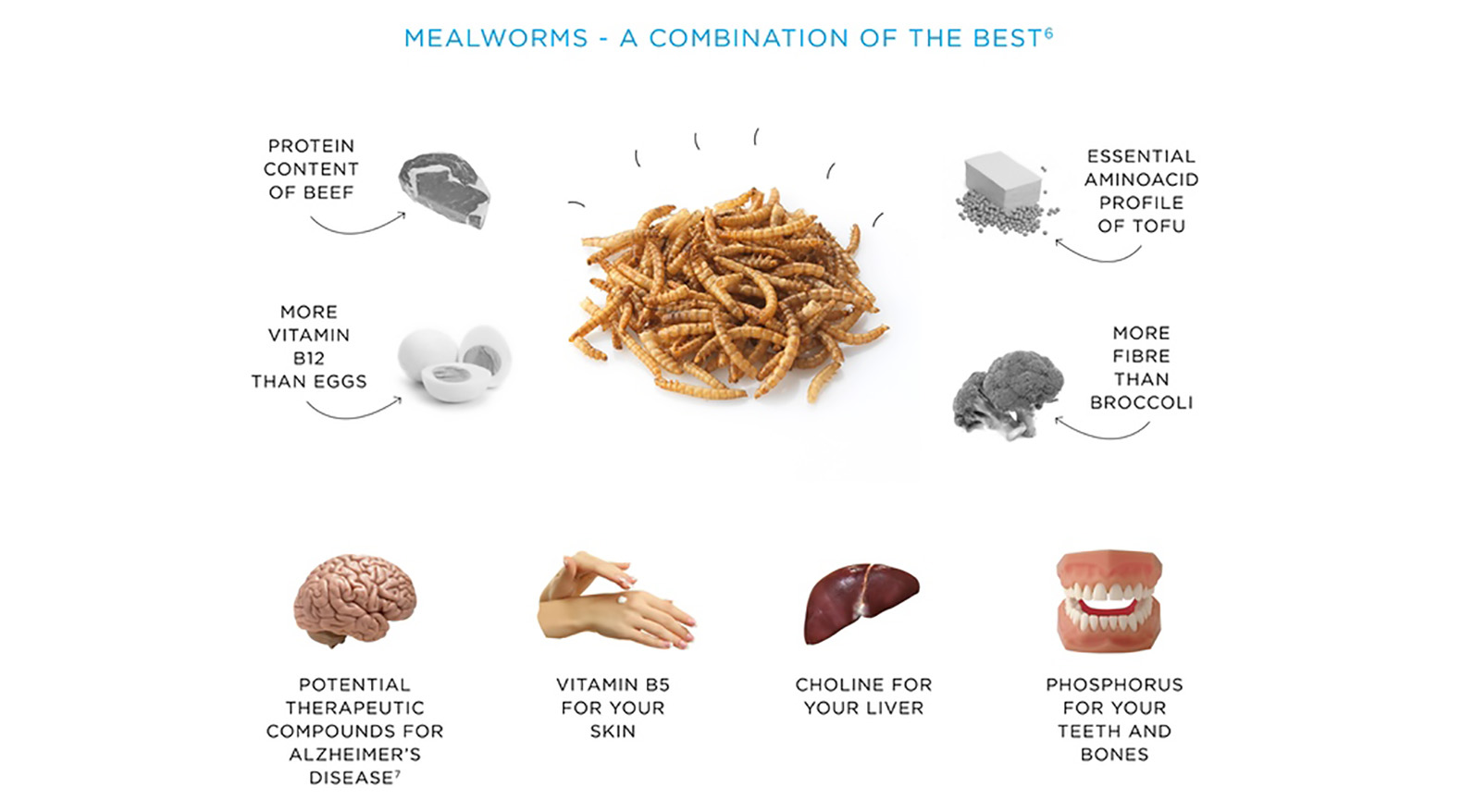 mealworms report Learn all about mealworms for birds, including what birds eat them and how to raise your own to offer birds a healthy treat.