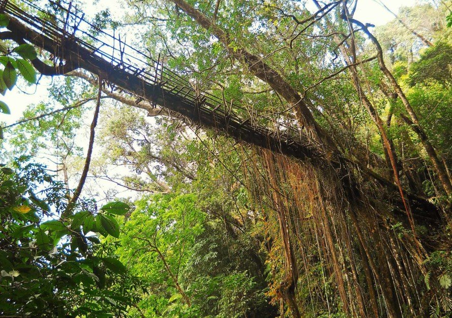 India's tree bridges, living tree bridges, living root bridges, Patrick Rogers, Living Root Bridge Project, northeast India jungle bridges, Meghalaya state living root bridges, War Khasi people, War Jaintia people, who makes living root bridges, where are india's living root bridges