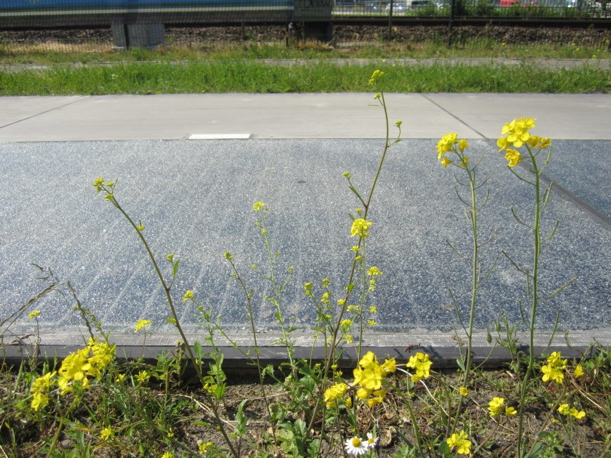 solaroad, solar panels, solar energy, solar power, solar roads, solar bike path, solar roadways, alternative energy, renewable resources, sustainable energy, solar powered, solar infrastructure