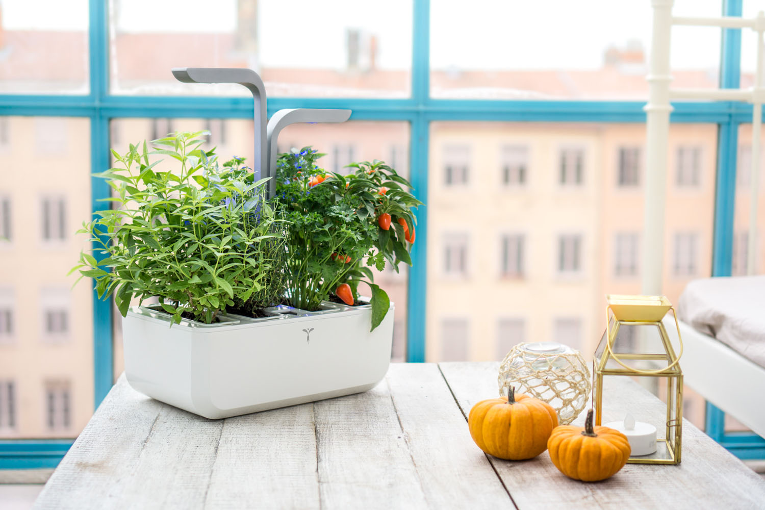 Plant Indoor Garden Indoor garden inhabitat green design innovation architecture the vritable indoor garden lets you grow herbs and vegetables right in your own kitchen workwithnaturefo