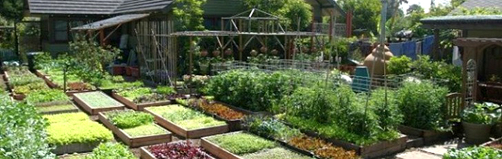 Dervaes family farm, California farm, family farm produces 6,000 pounds of food, urban agriculture, urban farming, 6,000 pounds of food on 4,000 square feet of land, California family farm