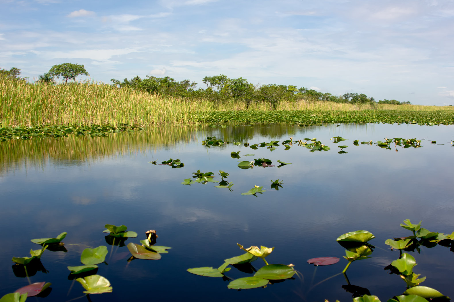 a short report on the everglades floridas dying natural wonder