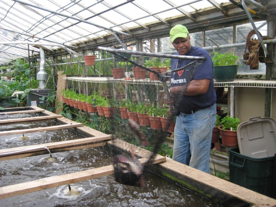 Will Allen, Will Allen Growing Power, Will Allen Aquaponics, Growing Power Aquaponics