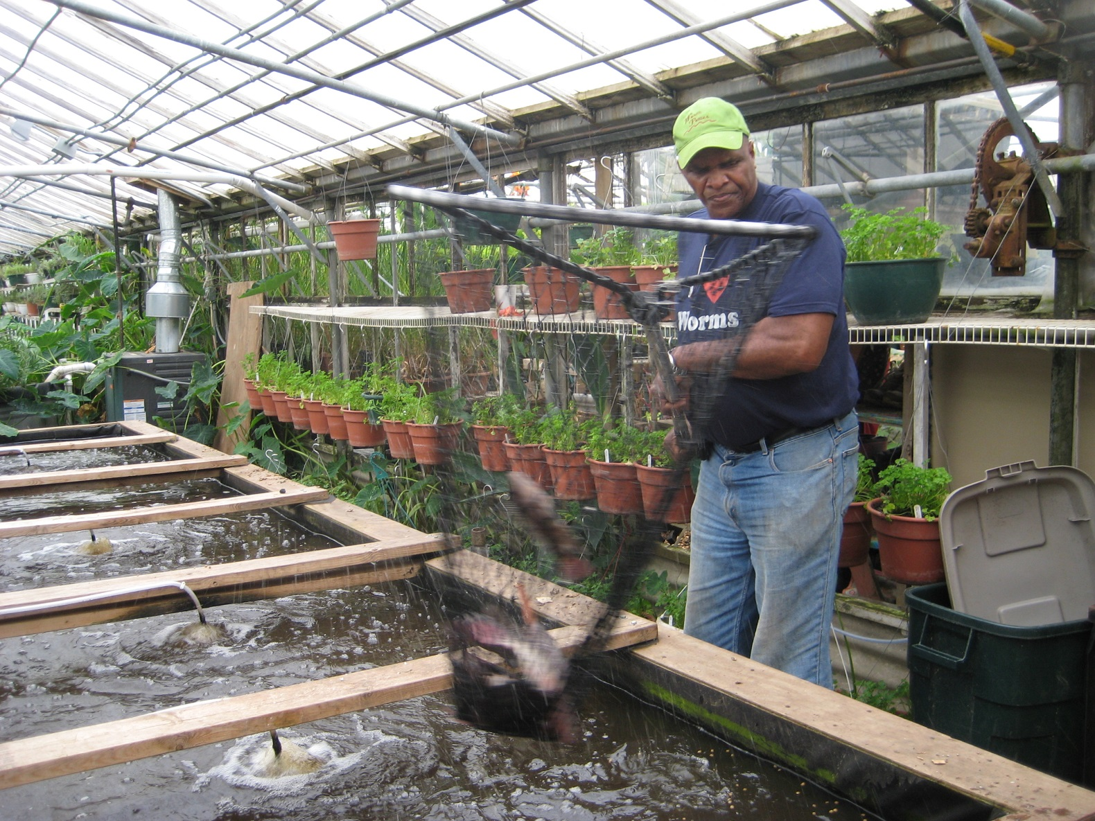 Growing Power grows fish, veggies, and community with aquaponic farm