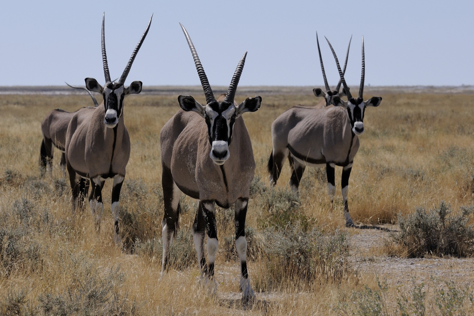 scientists wind back the clock 1000 years to study african wildlife